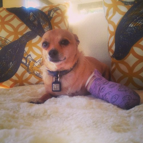 "Mercedes ""MJ"" Javid Shares Adorable Pic Of Her Hurt Pup For National Dog Day"